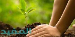 كيف يمكننا المحافظة على البيئة من أضرار وآثار التلوث